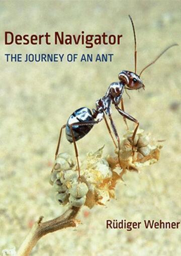 desert-navigator